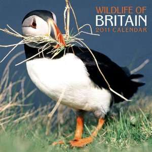 2011 Animal Calendars Wildlife of Britain   12 Month   30x30cm