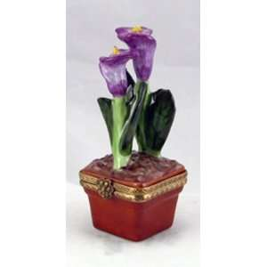 Purple Calla Lily Flower in Pot French Limited Edition